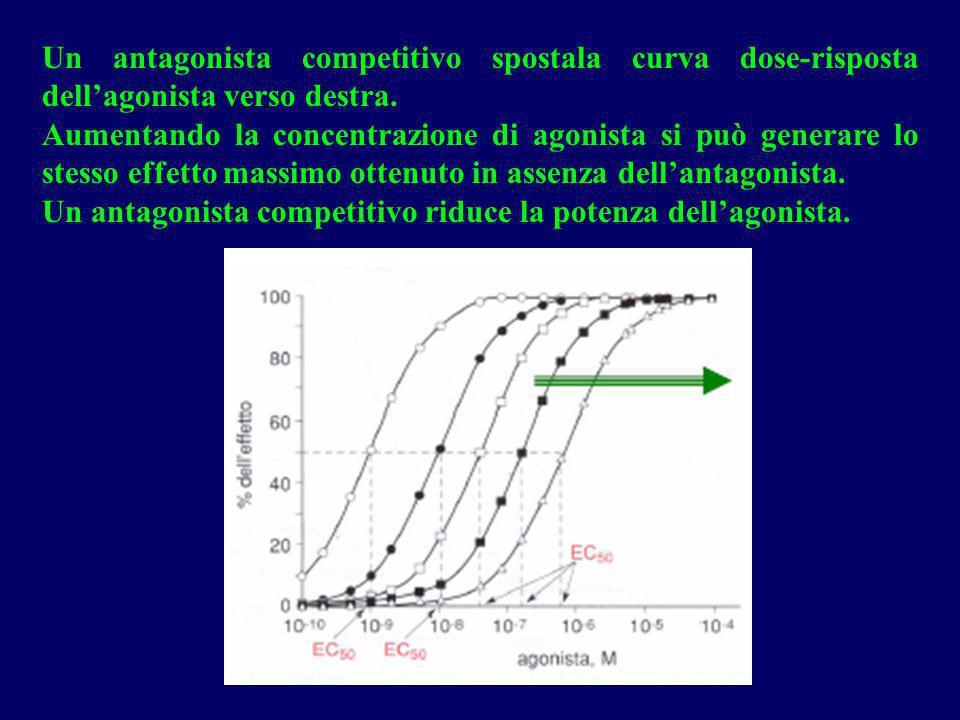 Un antagonista competitivo spostala curva dose-risposta dellagonista verso destra. Aumentando la concentrazione di agonista si può generare lo stesso