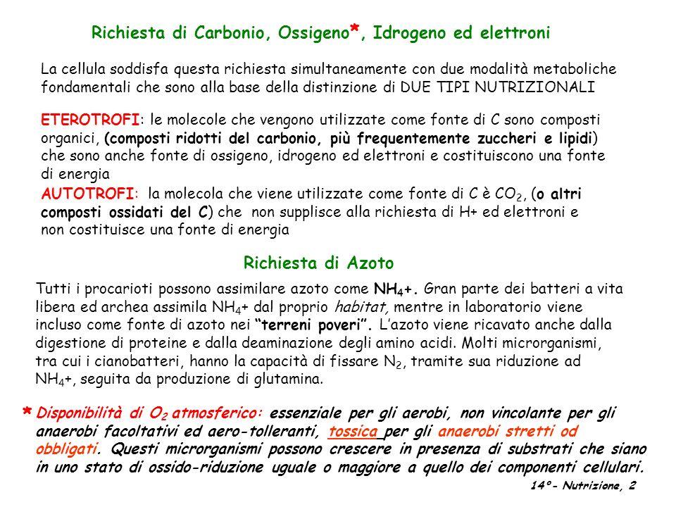 Richiesta di Carbonio, Ossigeno *, Idrogeno ed elettroni ETEROTROFI: le molecole che vengono utilizzate come fonte di C sono composti organici, (compo