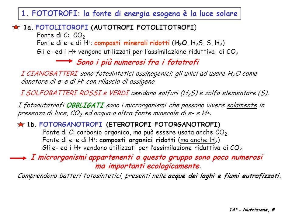 1. FOTOTROFI: la fonte di energia esogena è la luce solare I fotoautotrofi OBBLIGATI sono i microrganismi che possono vivere solamente in presenza di