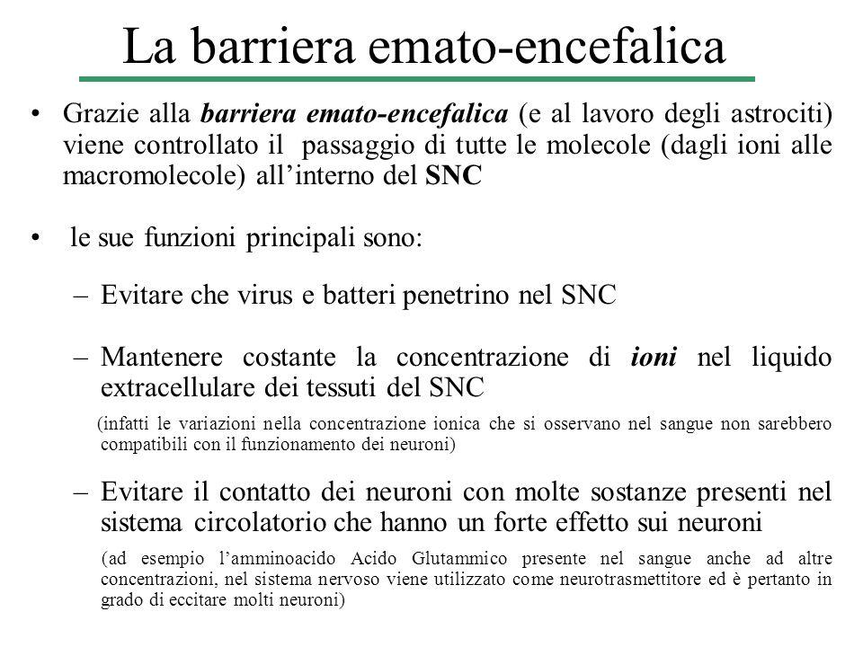 La barriera emato-encefalica Grazie alla barriera emato-encefalica (e al lavoro degli astrociti) viene controllato il passaggio di tutte le molecole (
