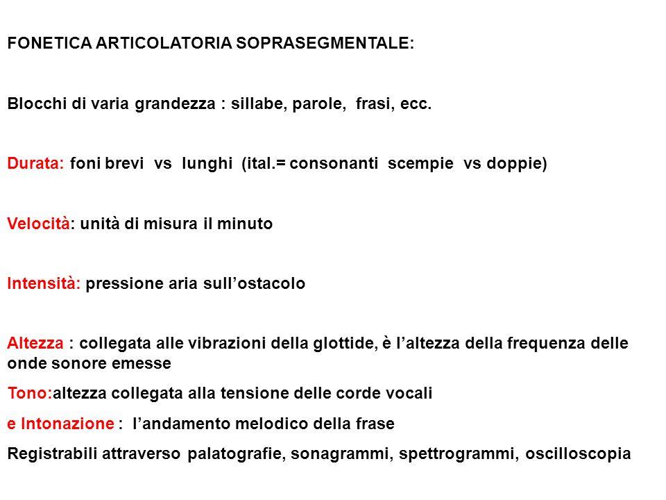 FONETICA ARTICOLATORIA SOPRASEGMENTALE: Blocchi di varia grandezza : sillabe, parole, frasi, ecc. Durata: foni brevi vs lunghi (ital.= consonanti scem