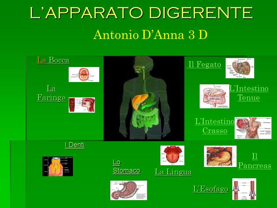 LA BOCCA La digestione degli alimenti comincia nella bocca, che costituisce lapertura iniziale dellapparato digerente.
