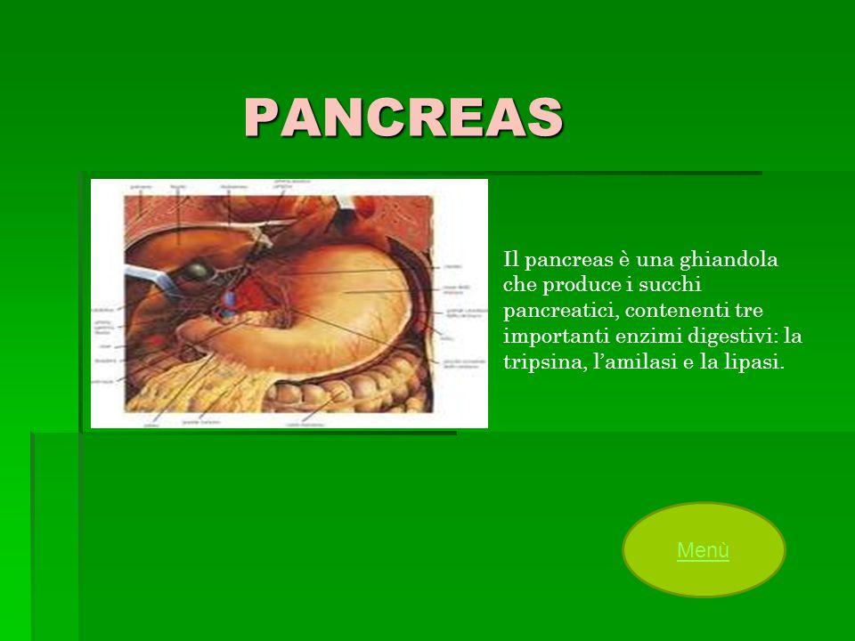 PANCREAS Il pancreas è una ghiandola che produce i succhi pancreatici, contenenti tre importanti enzimi digestivi: la tripsina, lamilasi e la lipasi.
