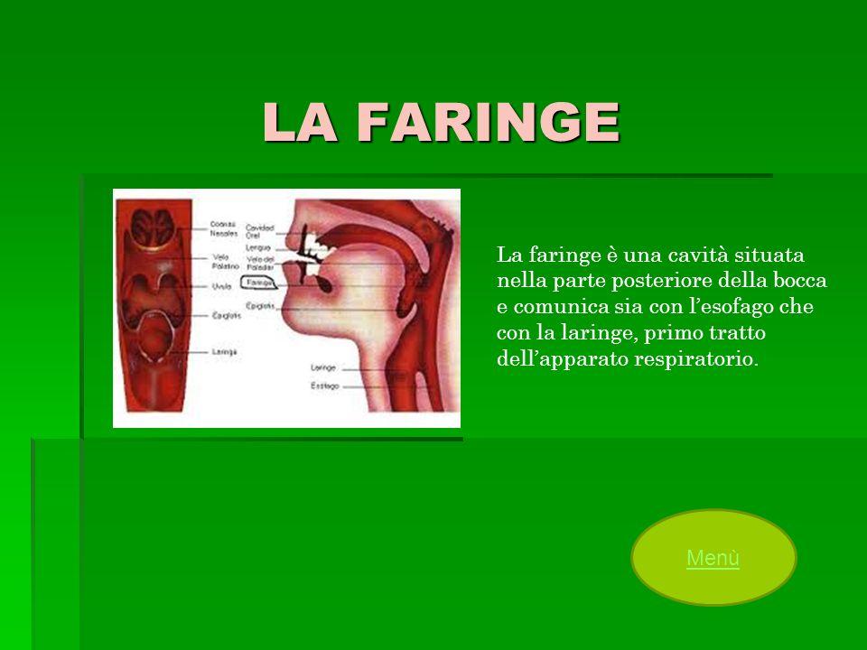 LA FARINGE La faringe è una cavità situata nella parte posteriore della bocca e comunica sia con lesofago che con la laringe, primo tratto dellapparat