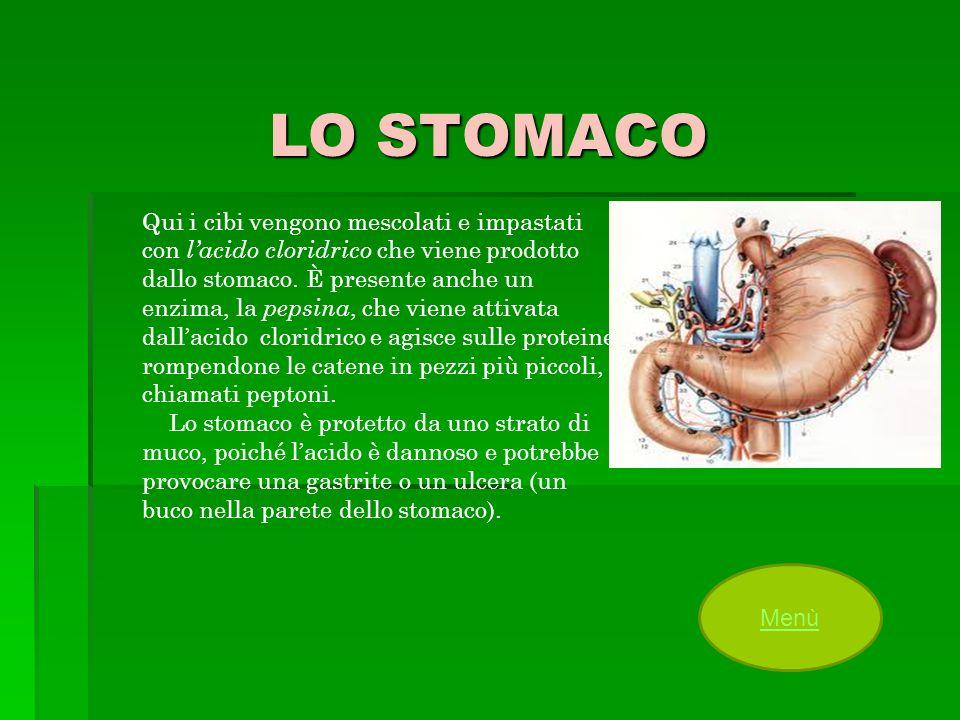LO STOMACO Qui i cibi vengono mescolati e impastati con lacido cloridrico che viene prodotto dallo stomaco. È presente anche un enzima, la pepsina, ch