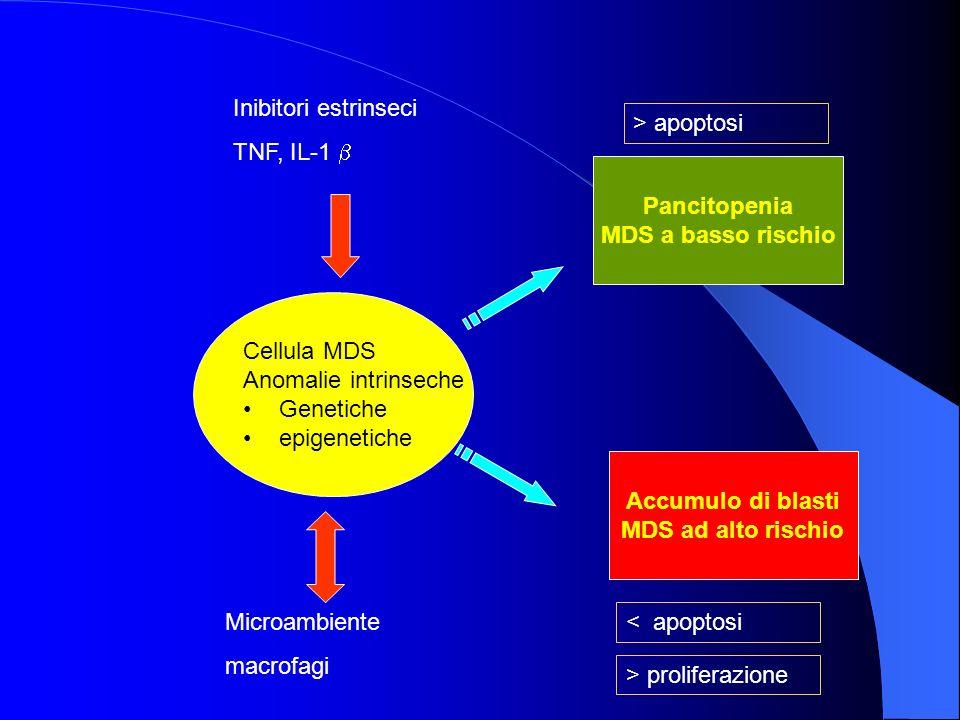 Cellula MDS Anomalie intrinseche Genetiche epigenetiche Inibitori estrinseci TNF, IL-1 Microambiente macrofagi Pancitopenia MDS a basso rischio Accumu