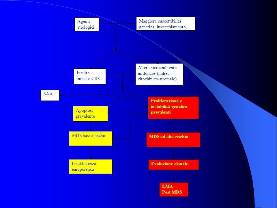 Agenti etiologici Maggiore suscettibilità genetica, invecchiamento Insulto iniziale CSE Apoptosi prevalente Proliferazione e instabilità genetica prev