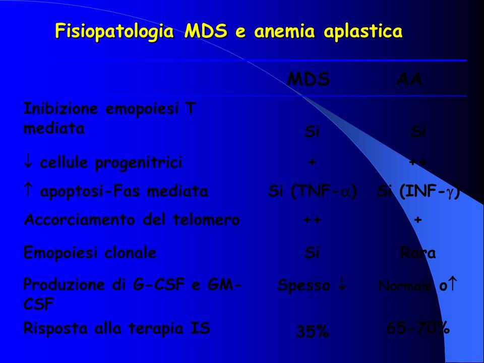 Fisiopatologia MDS e anemia aplastica MDSAA Inibizione emopoiesi T mediata Si cellule progenitrici+++ apoptosi-Fas mediataSi (TNF- )Si (INF- ) Accorci