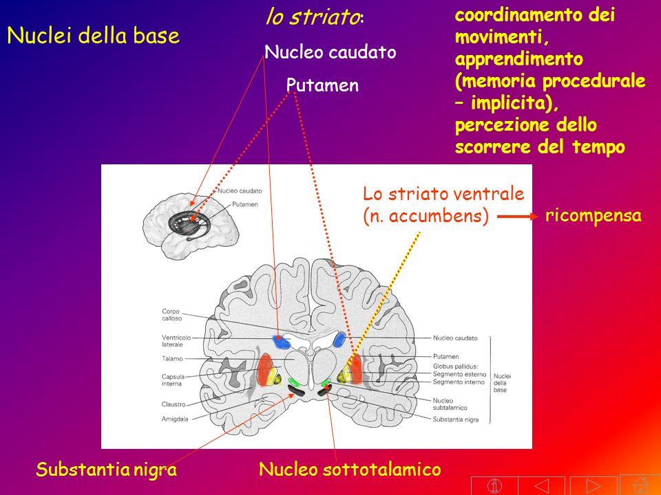 TELENCEFALO: Archicorteccia (ippocampo amigdala) emozioni, memoria PALEOCORTECCIA (vie olfattive) NEOCORTECCIA Aree sensitive primarie aree motorie primarie Aree sensitive secondariearee premotorie AREE ASSOCIATIVE