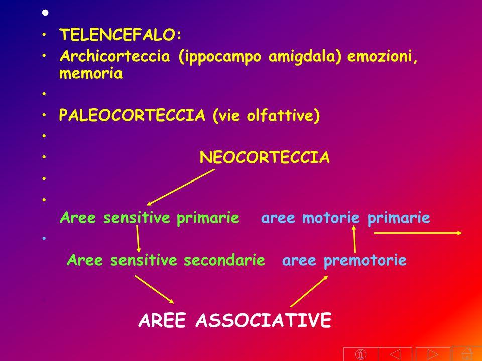 Frenologia di Gall Aree di Brodmann Area motrice primaria a. somatosensitiva primaria