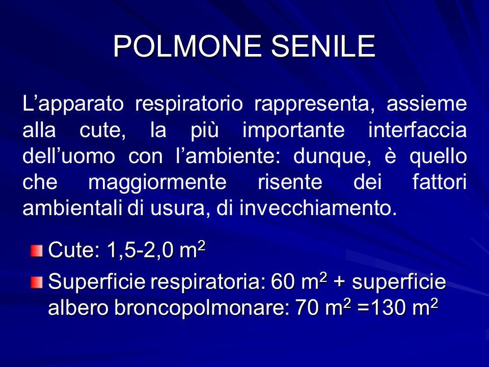 POLMONE SENILE Cute: 1,5-2,0 m 2 Superficie respiratoria: 60 m 2 + superficie albero broncopolmonare: 70 m 2 =130 m 2 Lapparato respiratorio rappresen
