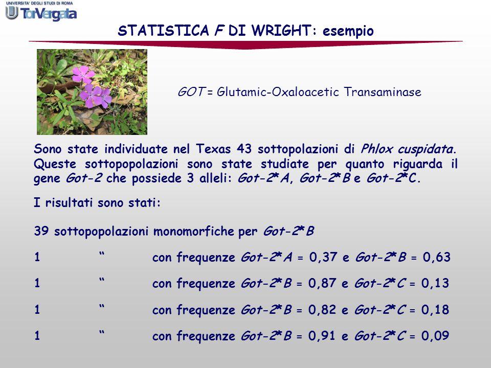 Sono state individuate nel Texas 43 sottopolazioni di Phlox cuspidata. Queste sottopopolazioni sono state studiate per quanto riguarda il gene Got-2 c