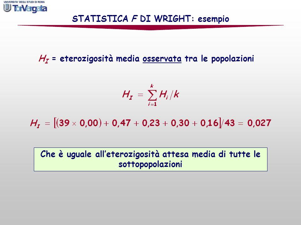 STATISTICA F DI WRIGHT: esempio H I = eterozigosità media osservata tra le popolazioni Che è uguale alleterozigosità attesa media di tutte le sottopop