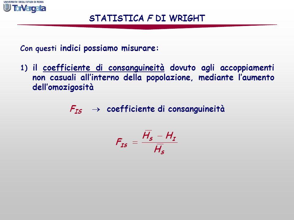 Con questi indici possiamo misurare: STATISTICA F DI WRIGHT F IS coefficiente di consanguineità 1) il coefficiente di consanguineità dovuto agli accop