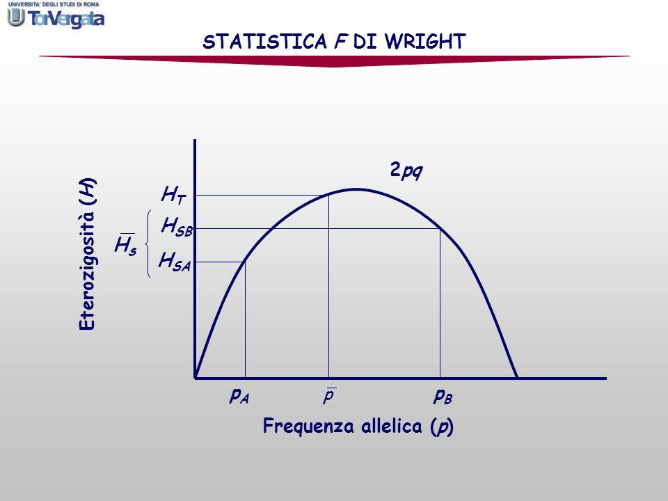 Per misurare il coefficiente di consanguineità complessivo si può usare il parametro F IT che comprende sia la perdita di eterozigosità dovuta agli accoppiamenti non casuali allinterno della sottopopolazione (F IS ) sia la frammentazione della popolazione complessiva (F ST ): STATISTICA F DI WRIGHT
