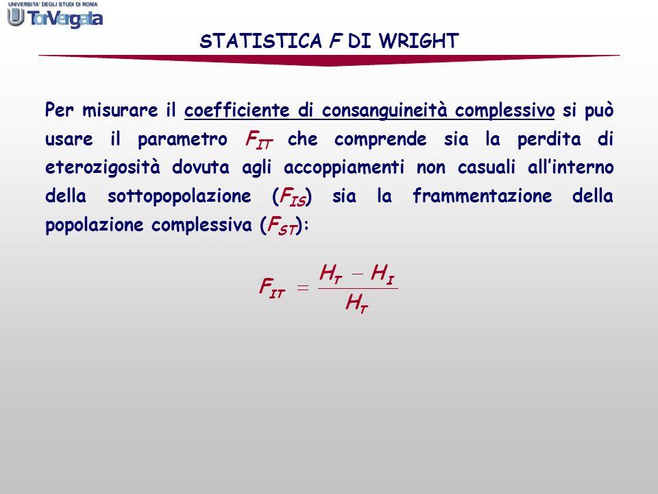 Indice di fissazione Coefficiente di consanguineità Coefficiente di consanguineità complessivo STATISTICA F DI WRIGHT: esempio NOTA: lindice di fissazione e il coefficiente di consanguineità complessivo sono uguali è naturalmente uguale a zero