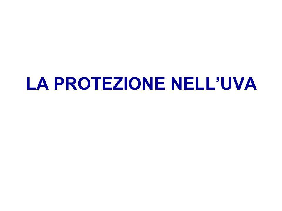 LA PROTEZIONE NELLUVA