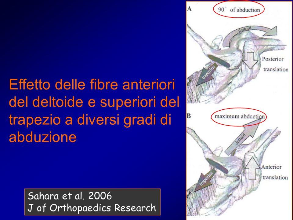 Effetto delle fibre anteriori del deltoide e superiori del trapezio a diversi gradi di abduzione Sahara et al. 2006 J of Orthopaedics Research
