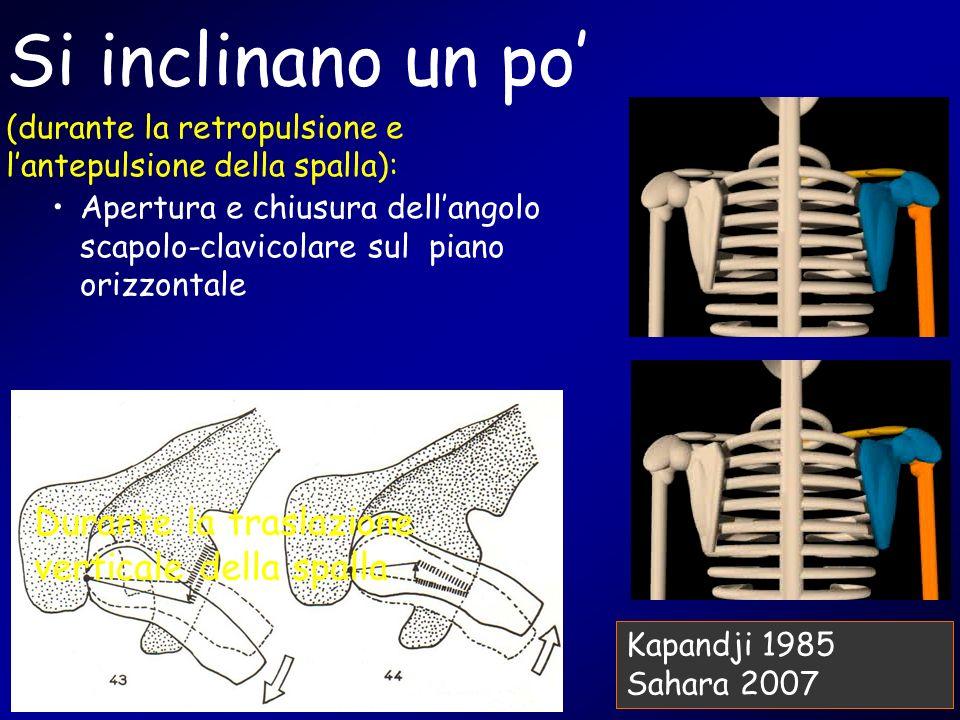 Si inclinano un po (durante la retropulsione e lantepulsione della spalla): Apertura e chiusura dellangolo scapolo-clavicolare sul piano orizzontale D