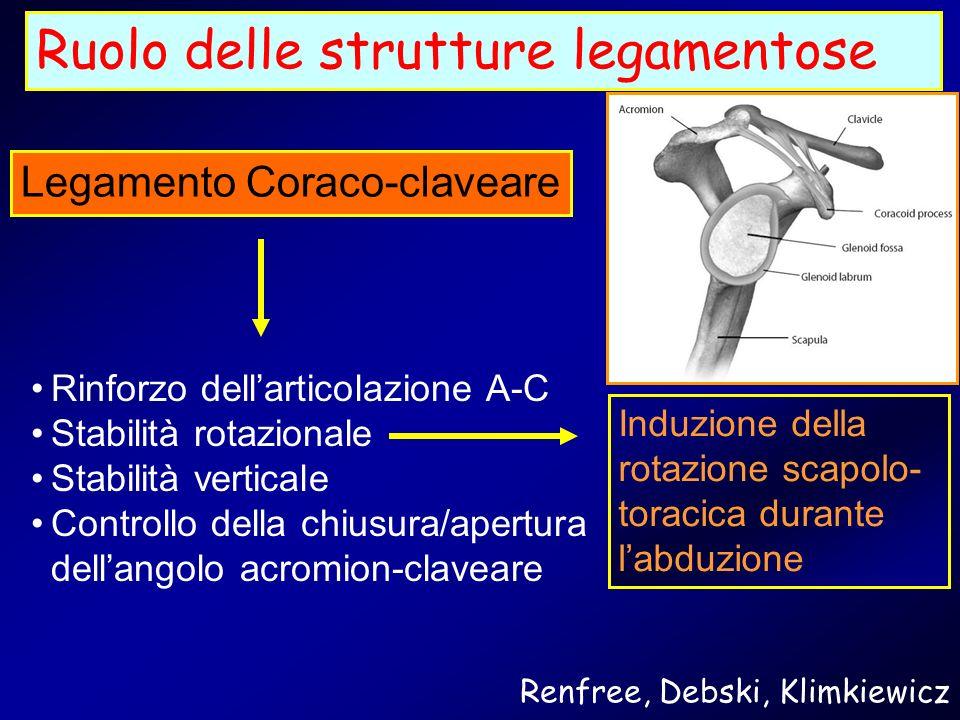 Ruolo delle strutture legamentose Legamento Coraco-claveare Rinforzo dellarticolazione A-C Stabilità rotazionale Stabilità verticale Controllo della c