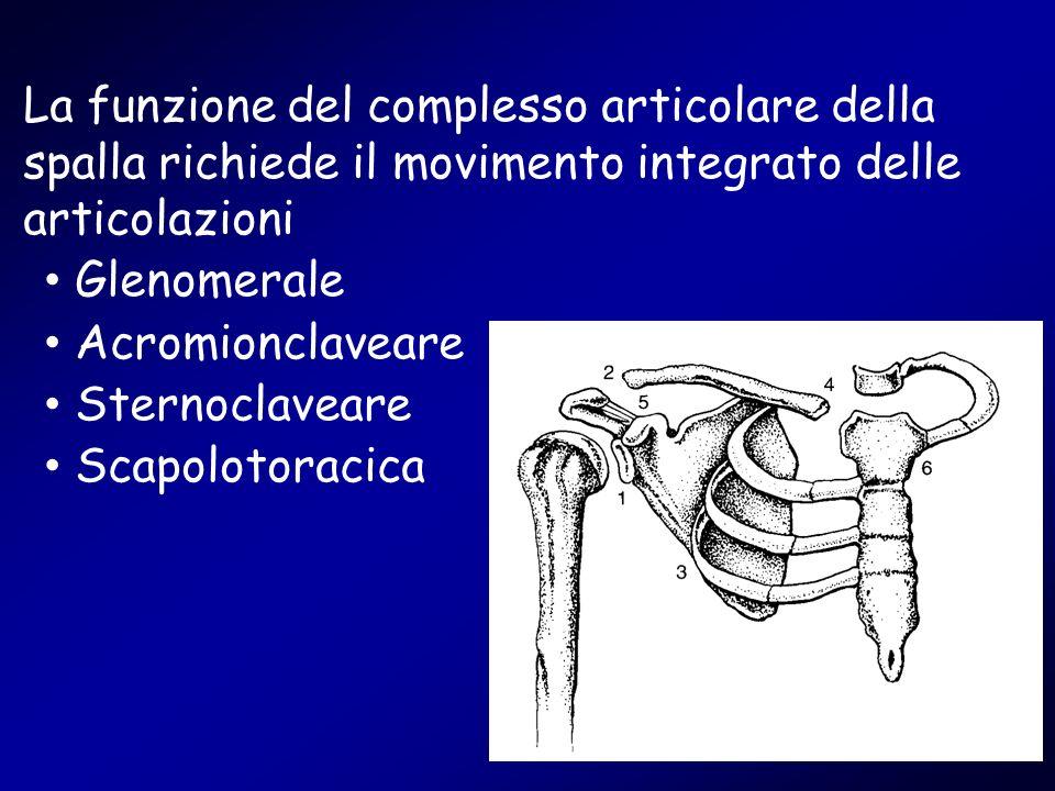 La funzione del complesso articolare della spalla richiede il movimento integrato delle articolazioni Glenomerale Acromionclaveare Sternoclaveare Scap