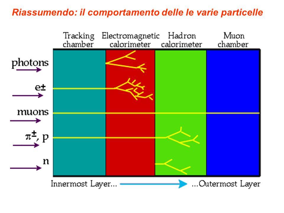 Riassumendo: il comportamento delle le varie particelle