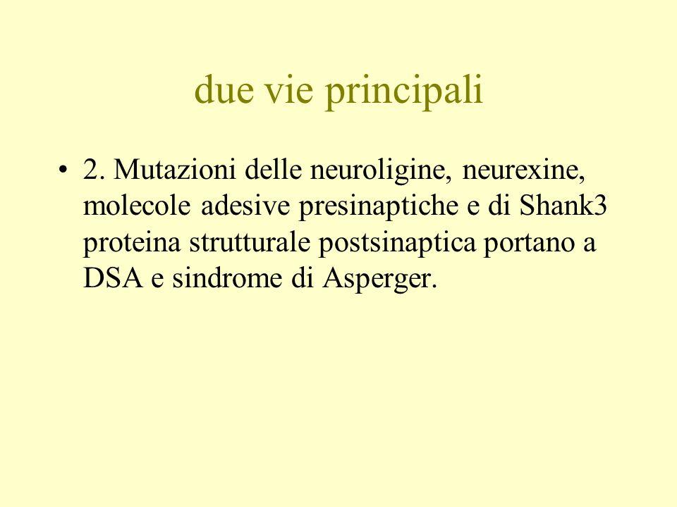 due vie principali 2. Mutazioni delle neuroligine, neurexine, molecole adesive presinaptiche e di Shank3 proteina strutturale postsinaptica portano a