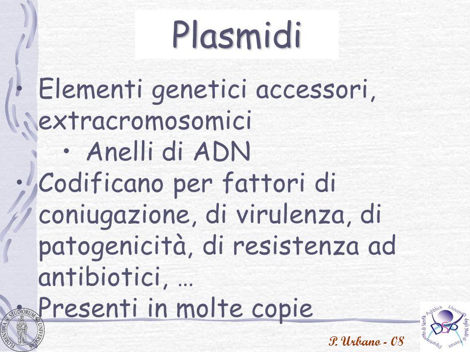 P. Urbano - 08 Plasmidi Elementi genetici accessori, extracromosomici Anelli di ADN Codificano per fattori di coniugazione, di virulenza, di patogenic