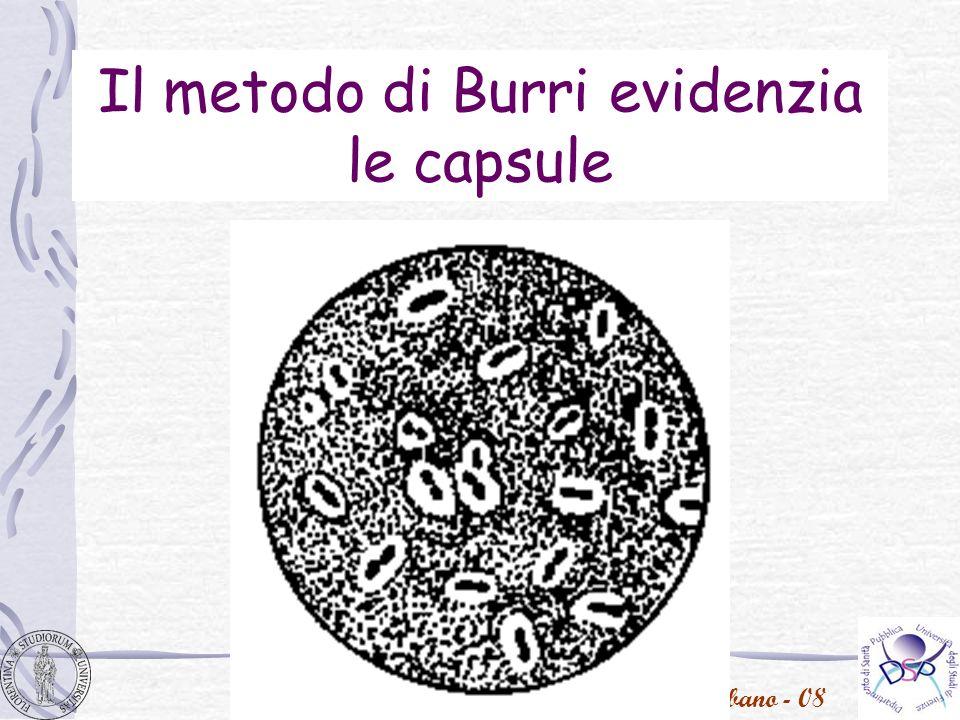 Il metodo di Burri evidenzia le capsule
