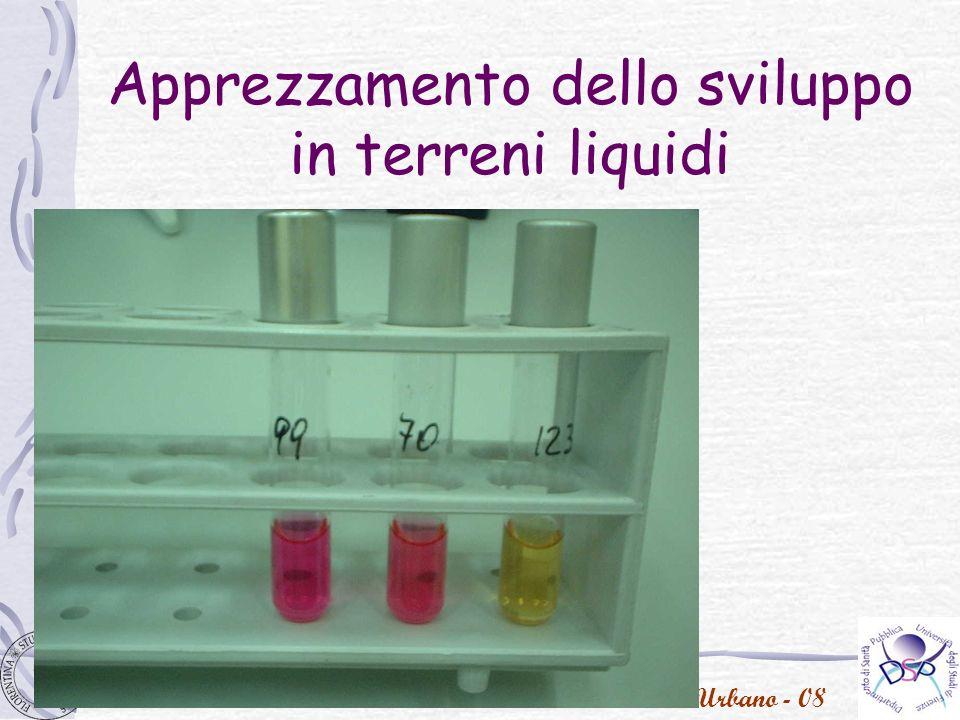 P. Urbano - 08 Apprezzamento dello sviluppo in terreni liquidi
