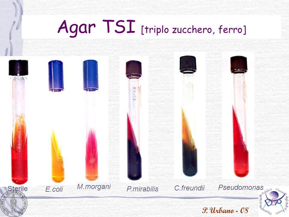P. Urbano - 08 Agar TSI [triplo zucchero, ferro] Sterile E.coli Pseudomonas M.morgani P.mirabilis C.freundii