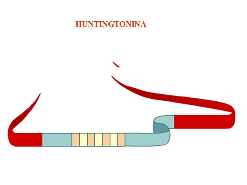 HUNTINGTONINA