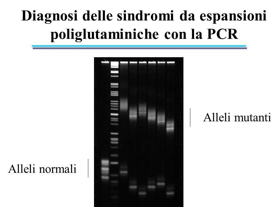 Diagnosi delle sindromi da espansioni poliglutaminiche con la PCR Alleli normali Alleli mutanti