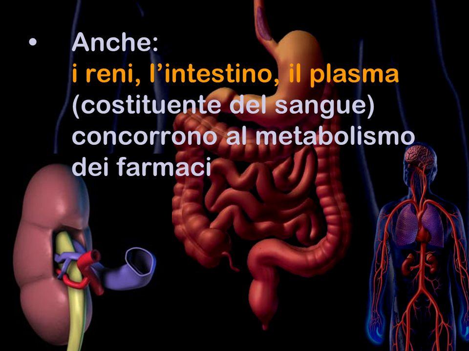Anche: i reni, lintestino, il plasma (costituente del sangue) concorrono al metabolismo dei farmaci