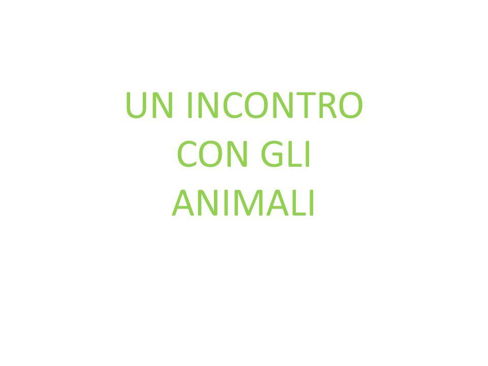 UN INCONTRO CON GLI ANIMALI