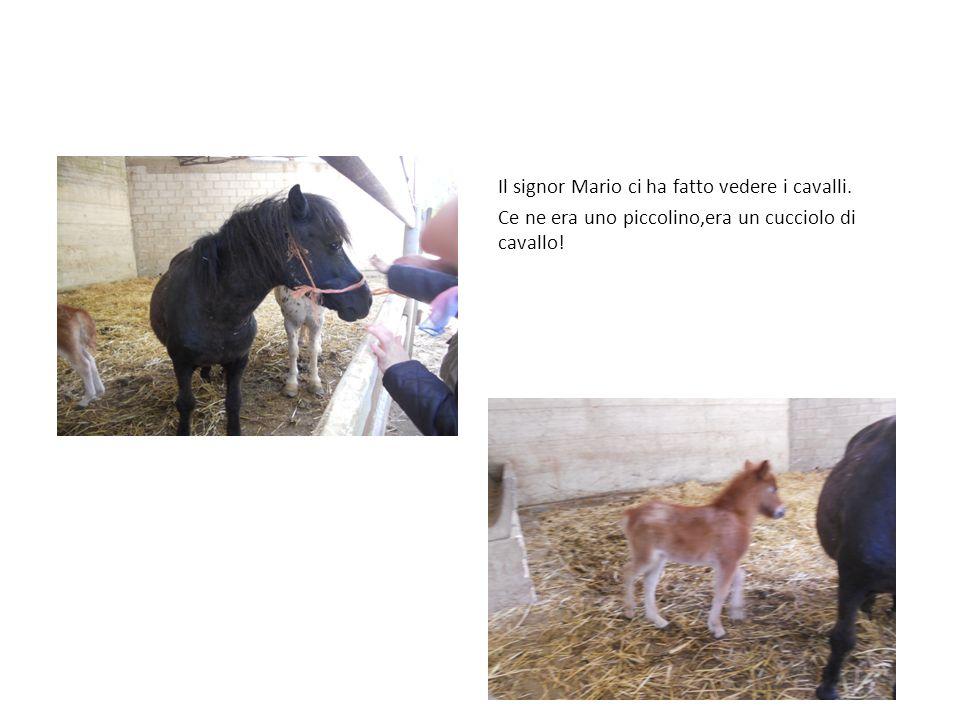 Il signor Mario ci ha fatto vedere i cavalli. Ce ne era uno piccolino,era un cucciolo di cavallo!
