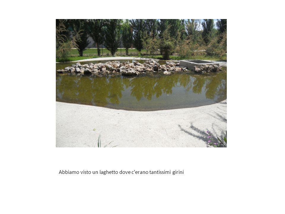 Abbiamo visto un laghetto dove cerano tantissimi girini