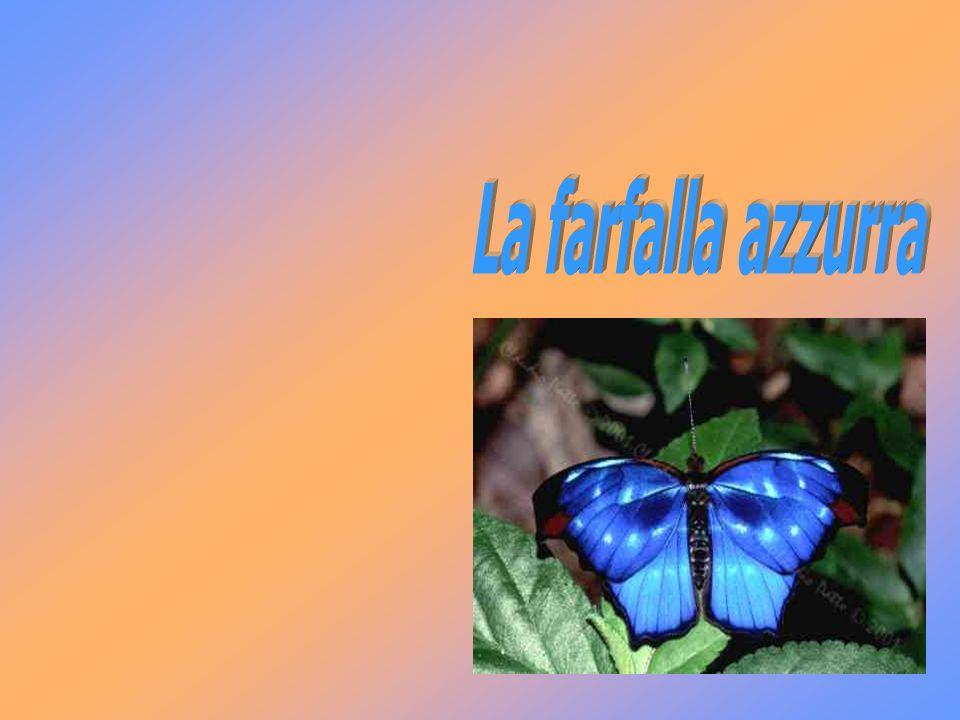 La nostra vita sta nelle nostre mani come la farfalla azzurra.