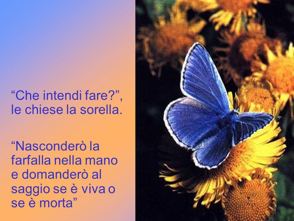 Finalmente una di loro un giorno si incamminò verso la casa del saggio portando con sé una farfalla azzurra che avrebbe utilizzato per trarlo in ingan