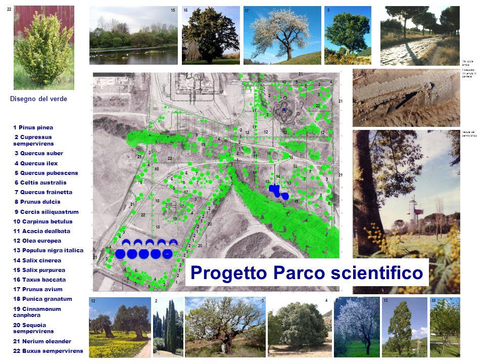 23 Disegno del verde 1 Pinus pinea 2 Cupressus sempervirens 3 Quercus suber 4 Quercus ilex 5 Quercus pubescens 6 Celtis australis 7 Quercus frainetta