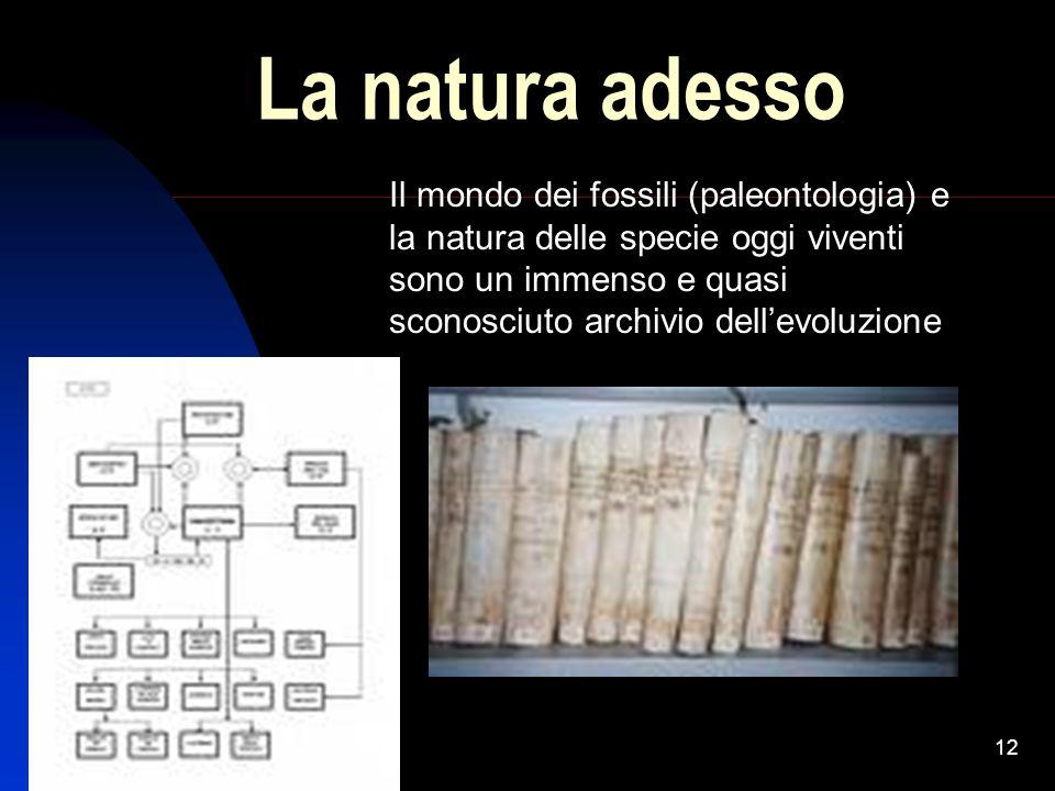 12 La natura adesso Il mondo dei fossili (paleontologia) e la natura delle specie oggi viventi sono un immenso e quasi sconosciuto archivio dellevoluz