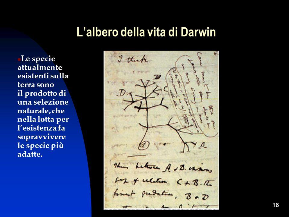 16 Lalbero della vita di Darwin Le specie attualmente esistenti sulla terra sono il prodotto di una selezione naturale, che nella lotta per lesistenza
