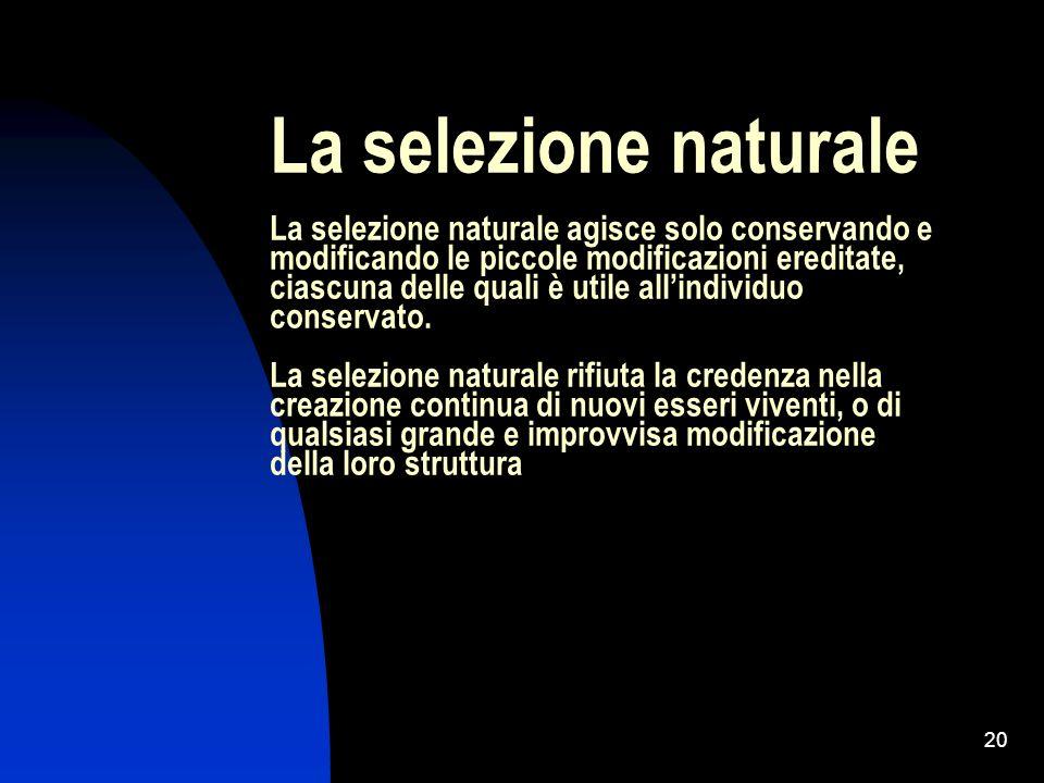 20 La selezione naturale La selezione naturale agisce solo conservando e modificando le piccole modificazioni ereditate, ciascuna delle quali è utile