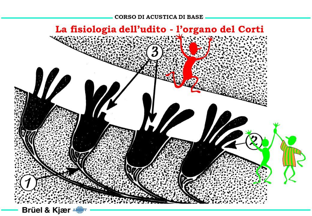 CORSO DI ACUSTICA DI BASE La fisiologia delludito - risposta in frequenza timpano Coclea (sviluppo) risposta