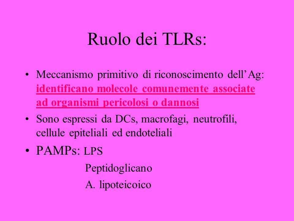 Ruolo dei TLRs: Meccanismo primitivo di riconoscimento dellAg: identificano molecole comunemente associate ad organismi pericolosi o dannosi Sono espressi da DCs, macrofagi, neutrofili, cellule epiteliali ed endoteliali PAMPs: LPS Peptidoglicano A.
