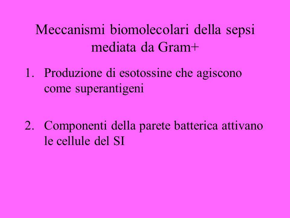 Meccanismi biomolecolari della sepsi mediata da Gram+ 1.Produzione di esotossine che agiscono come superantigeni 2.Componenti della parete batterica attivano le cellule del SI