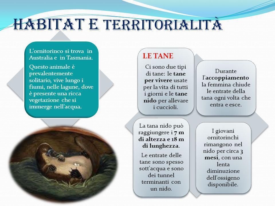 Habitat e territorialità LE TANE Ci sono due tipi di tane: le tane per vivere usate per la vita di tutti i giorni e le tane nido per allevare i cuccio