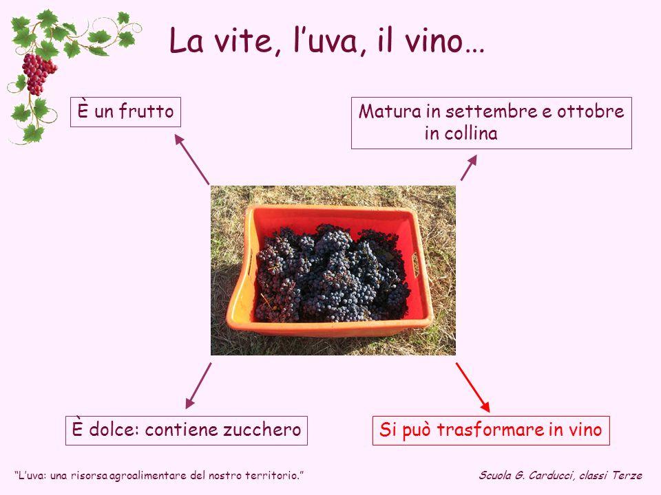 È dolce: contiene zucchero Matura in settembre e ottobre in collina È un frutto Si può trasformare in vino Luva: una risorsa agroalimentare del nostro