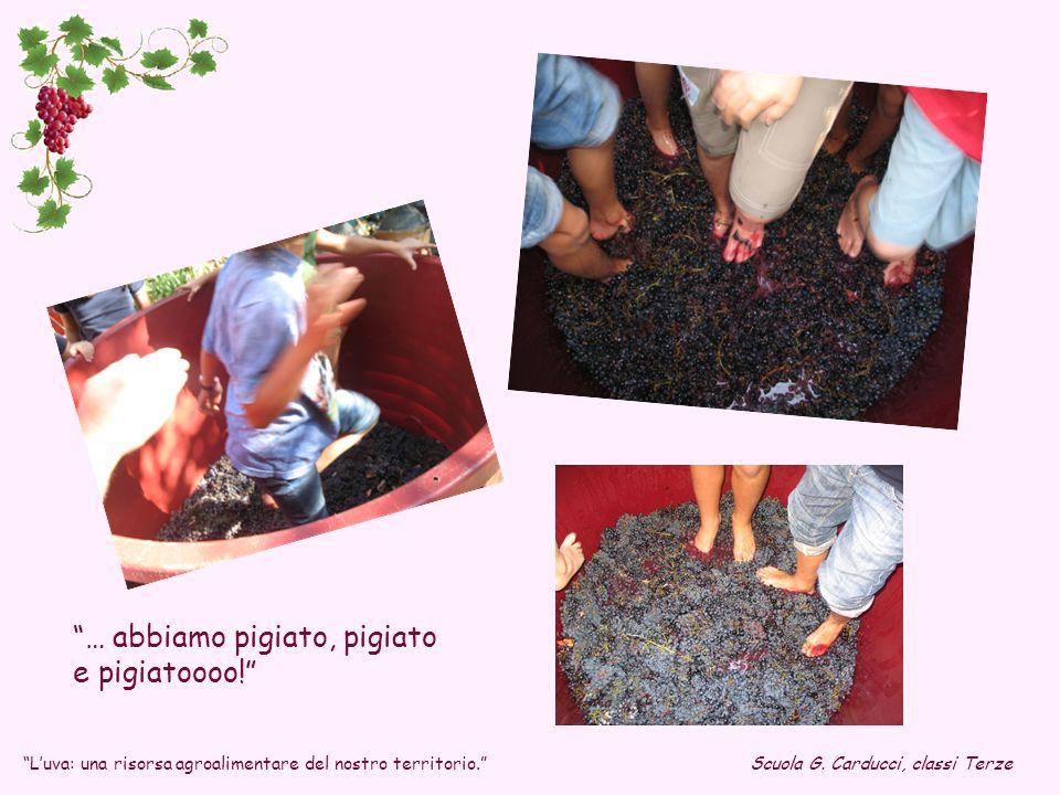 … abbiamo pigiato, pigiato e pigiatoooo! Scuola G. Carducci, classi TerzeLuva: una risorsa agroalimentare del nostro territorio.