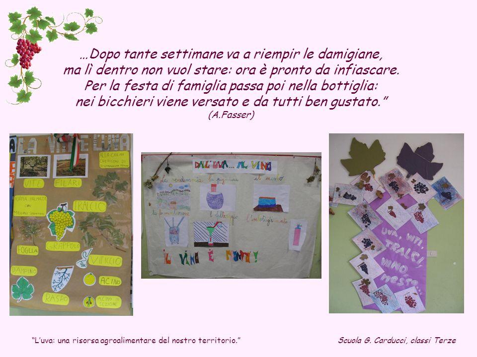 Luva: una risorsa agroalimentare del nostro territorio. Scuola G. Carducci, classi Terze …Dopo tante settimane va a riempir le damigiane, ma lì dentro